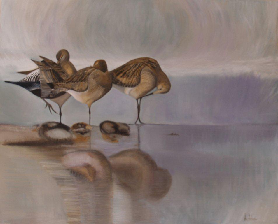 Oiseaux avocette