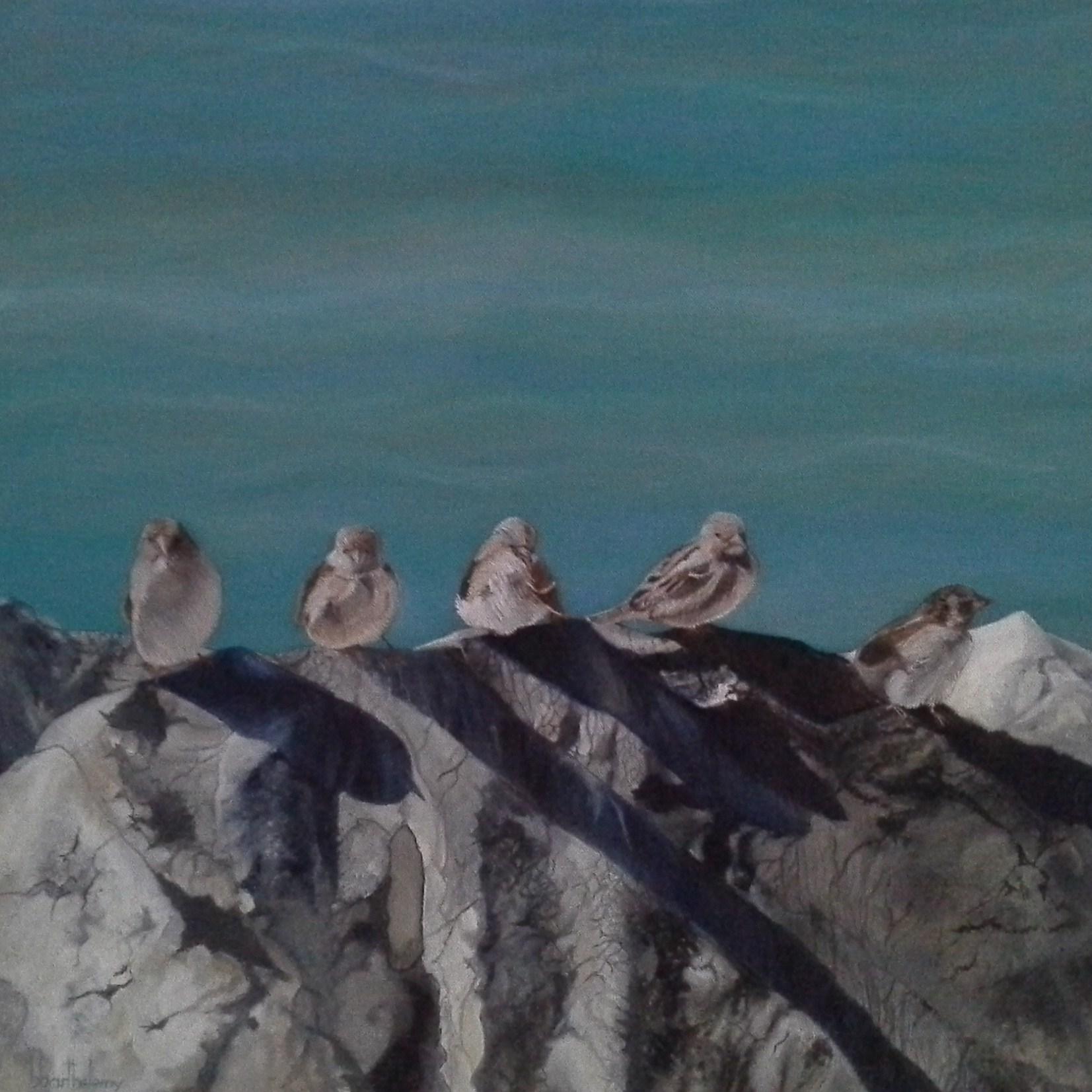 Oiseaux du lac Léman